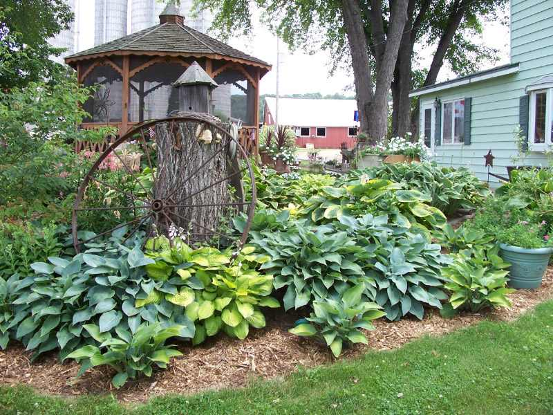Dividing, Transplanting, and Moving Overgrown Hostas ...